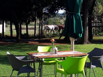 Tea Garden Lawn Seating view Horses_